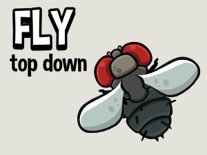 animated fly