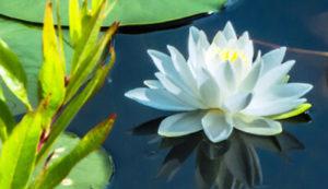Burton Wetlands Nature Preserve Habitat