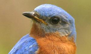 Blue and Orange Bird
