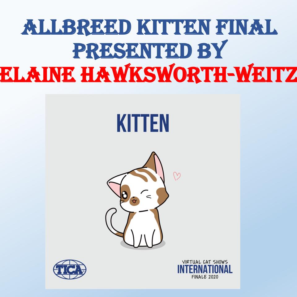 Allbreed Kitten - Hawskworth-Weitz