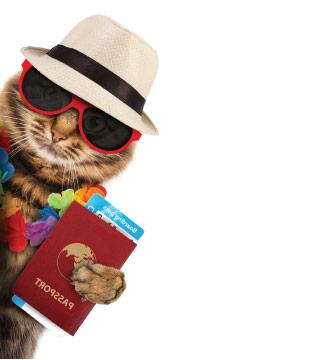 CTA - Cat Boarding