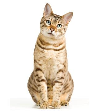 CTA - Cat Breeds