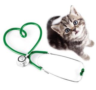 CTA - Cat Cardiology