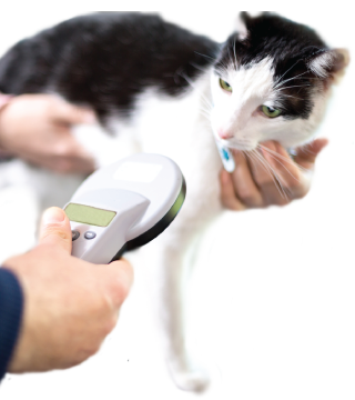 CTA - Cat Laser Therapy
