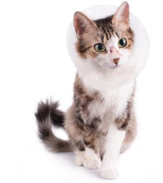 CTA - Cat Surgery