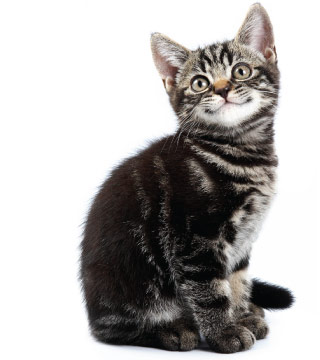 CTA - Cat Vaccination