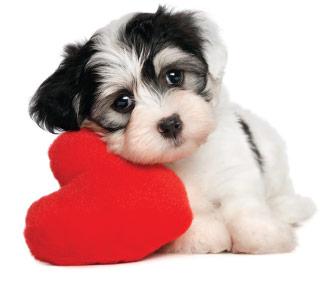 Dog Cardiology