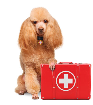Dog Emergency Care