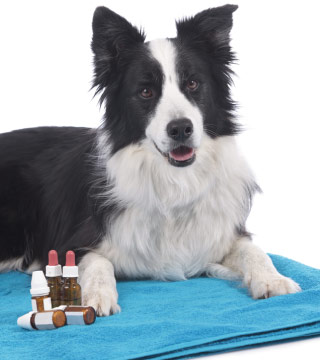 Dog Homeopathic & Natraceutical