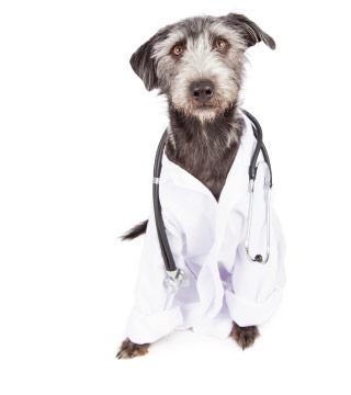 Dog Laboratory