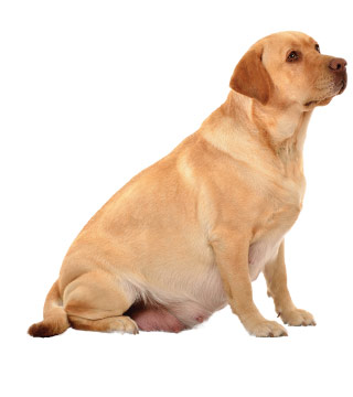Canine sperm motility necessary for pregnancy