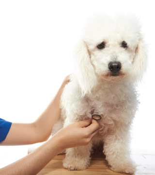 Dog Preventive Care