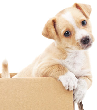 How To Take Care Of A Puppy What You Must Know