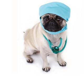 Dog Surgery