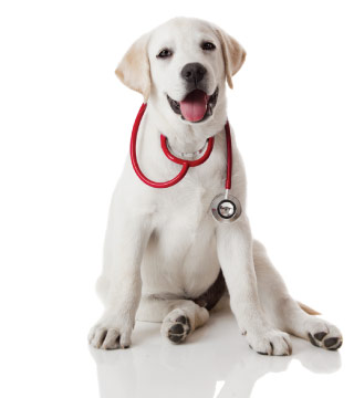 Dog Wellness Exams