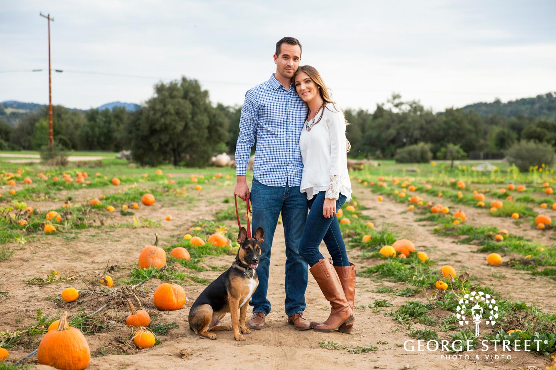 pumpkin patch engagement photo