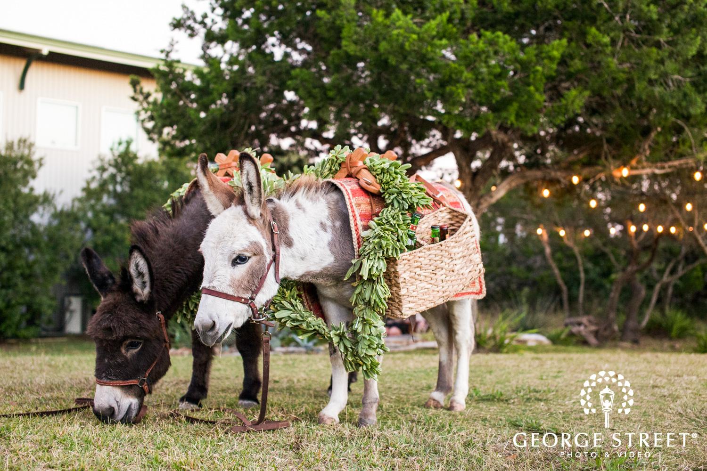donkeys at wedding reception