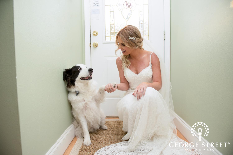 adorable bride and dog portrait vintage hair accessory
