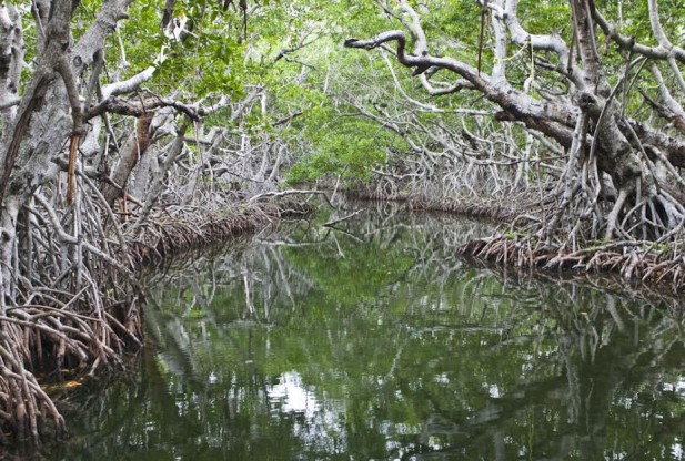 The state govt. of Maharashtra will sign a contract with ISRO to put in place a satellite-based surveillance system to keep encroachments off the mangrove land.