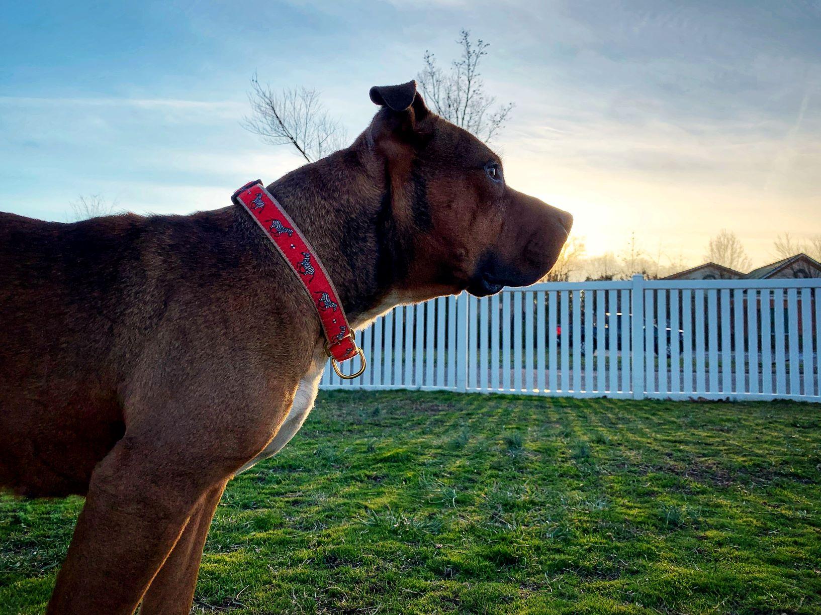 Darcy looking ahead