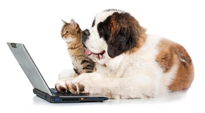 dog cat laptop
