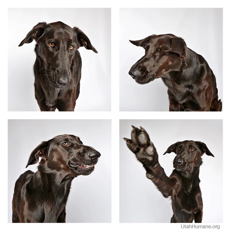 HSU dog