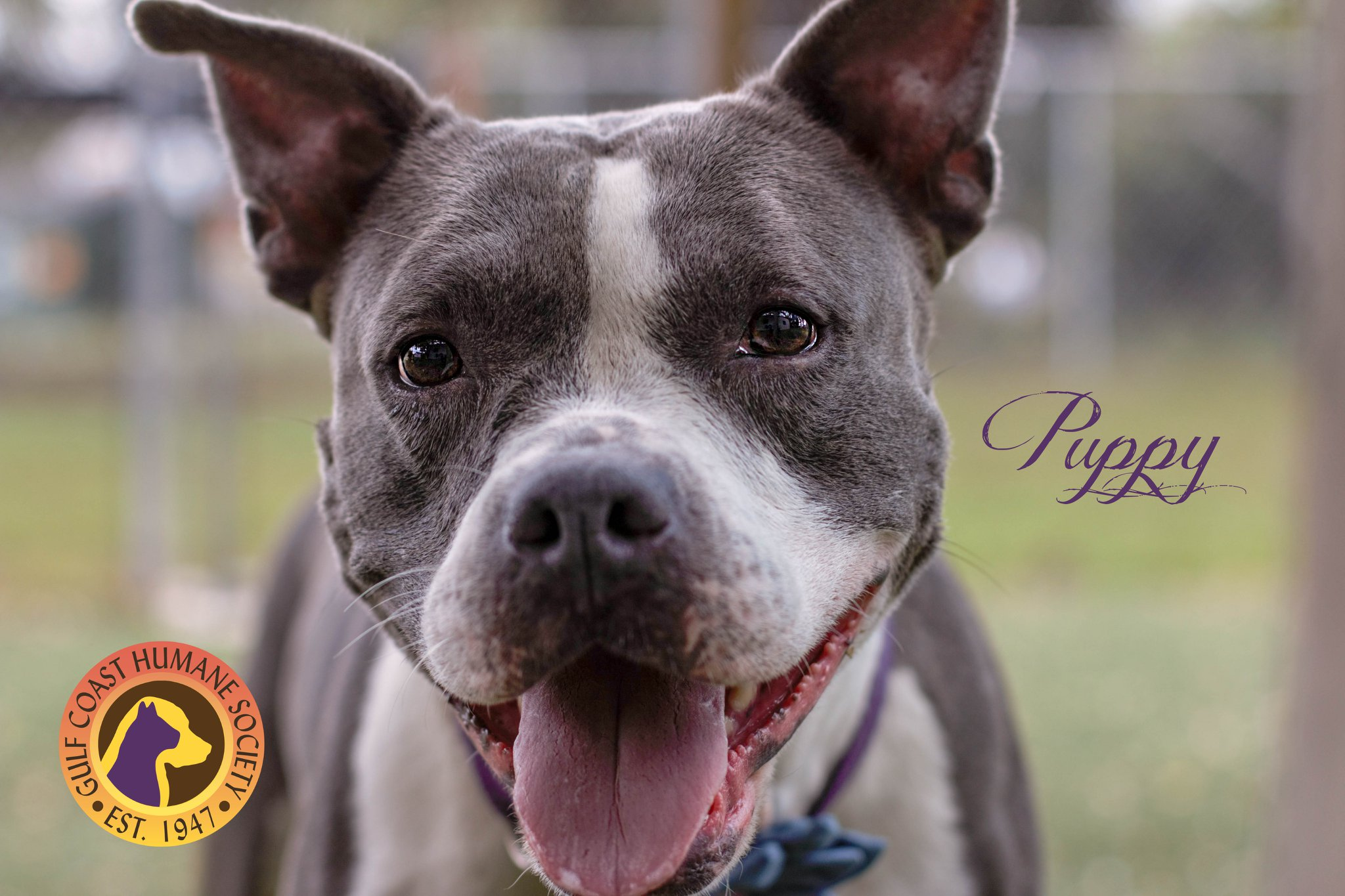 Puppy is available for adoption!