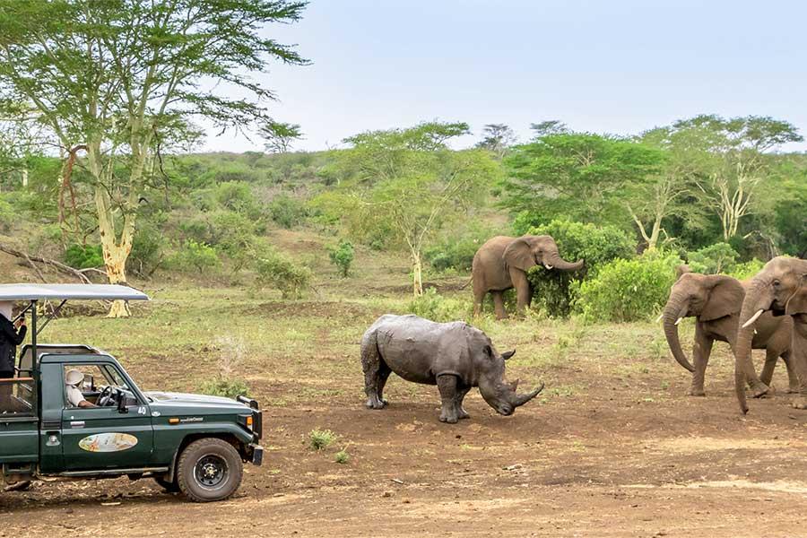 Day Excursion Zulu Nyala