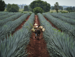 Home_image_tequila-shutterstock_291156707