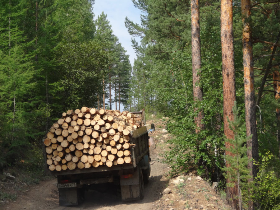 Friends of Siberian Forests