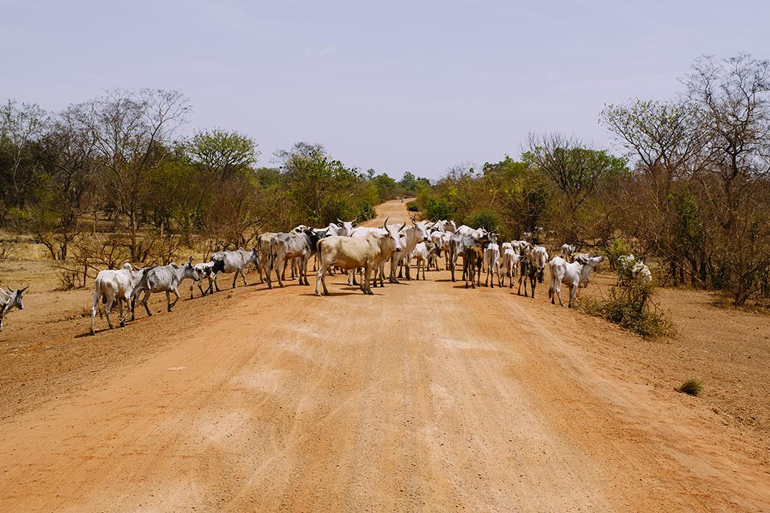 Asociación Guyra Paraguay