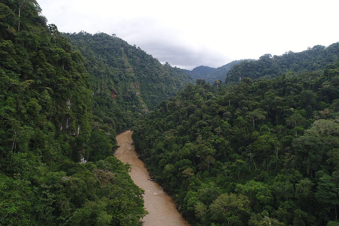 Amazonicos por la Amazonia (AMPA)
