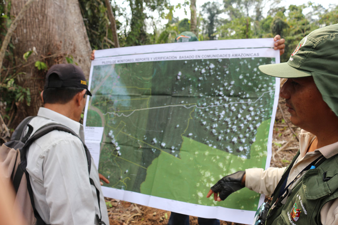 Rainforest Foundation US