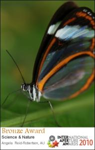Oleria Glasswing