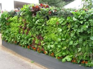 Mobiwall with veggies
