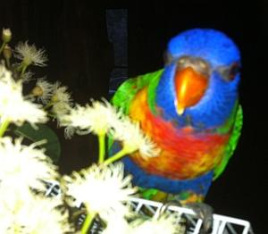 Birds can be cared for in my home