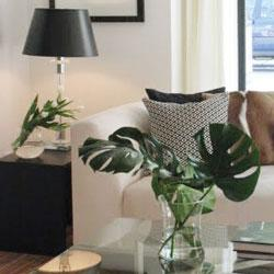 home_styling_Sunshine_Coast_1