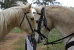 Equine (Horse) Bowen Therapy