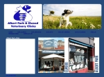 View More Information on Albert Park Veterinary Clinic, Albert park
