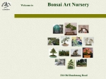 View More Information on Bonsai Art Pty Ltd, Terrey hills
