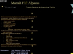 View More Information on Mariah Hill Alpacas & Exports