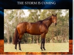 View More Information on Carin Park Stud