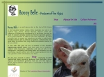 View More Information on Bonny Belle Alpaca