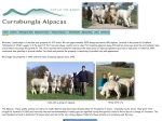 View More Information on Currabungla Alpacas
