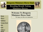 View More Information on Brageeta