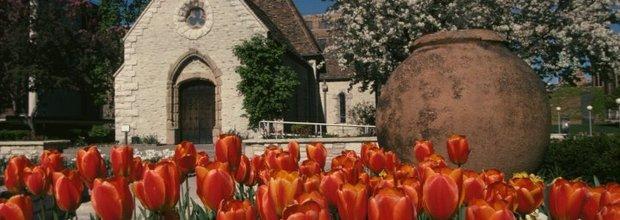 Default_6f0d59f286f94026b2a1ed75ca5236c6-991f4afde57d-mu_tulips