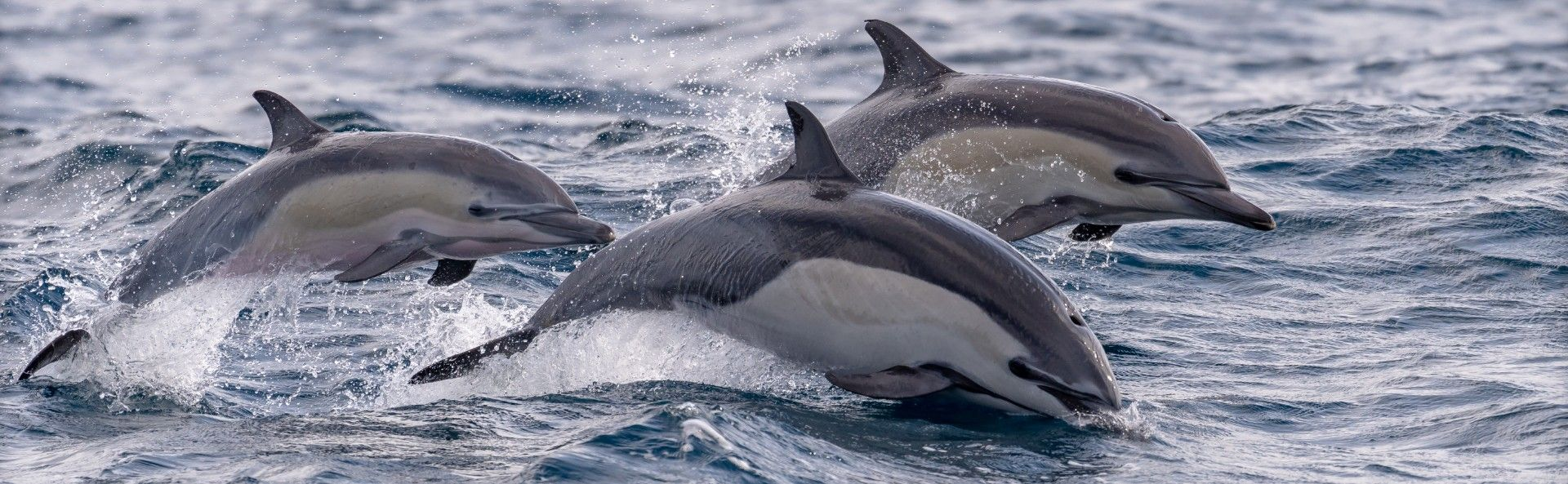 The fight to save dolphins and whales from European fishing nets