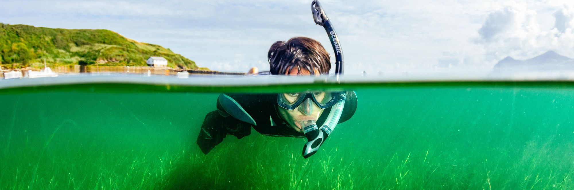 Can seagrass realise its potential in the fight against climate change?