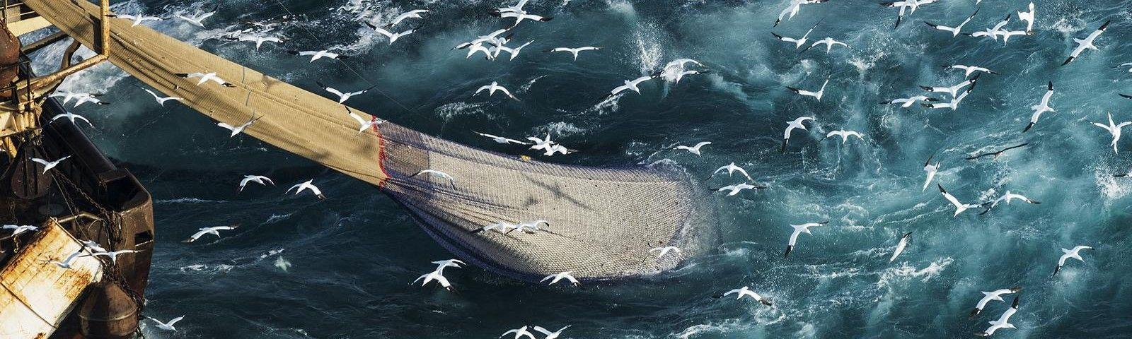 UK seeks leadership position on marine protection