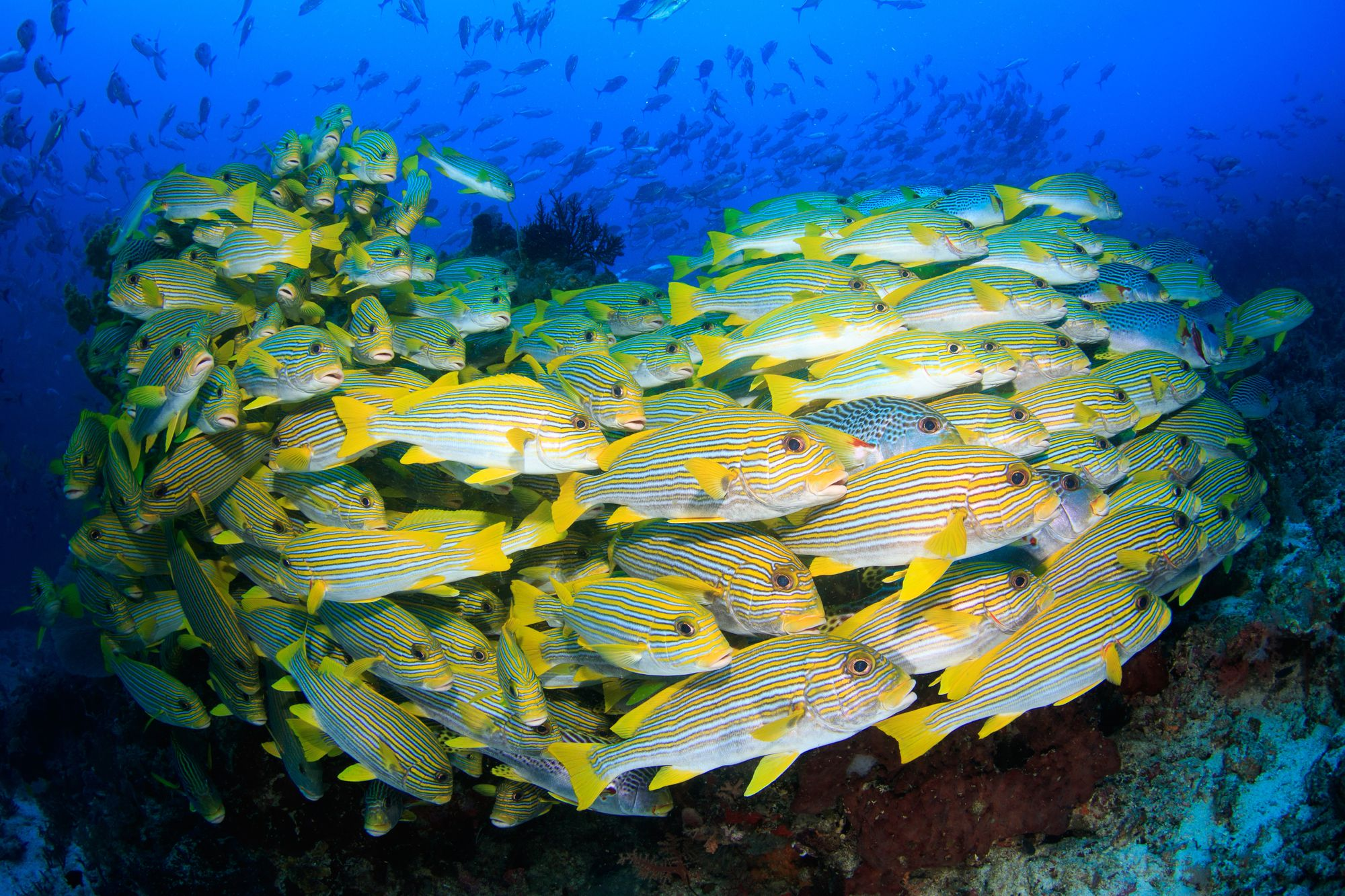 Has a new paradigm for ocean management finally arrived?